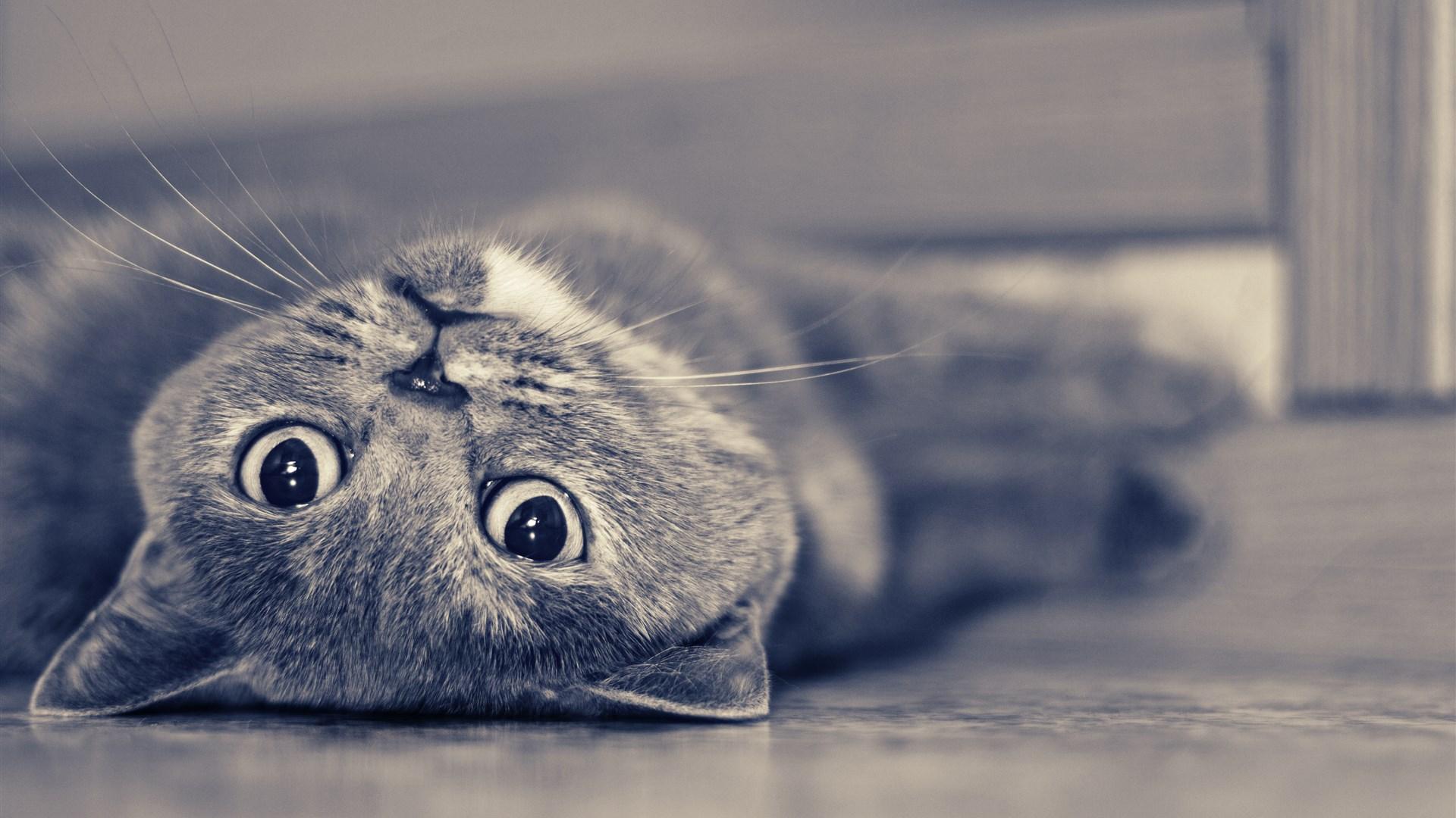 叠叠猫可爱背景