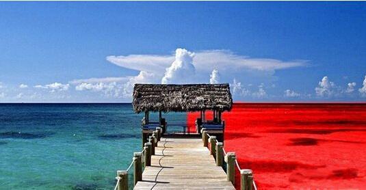 红海市场和蓝海市场_红海战略和蓝海战略,你选择哪一个? | 12Reads